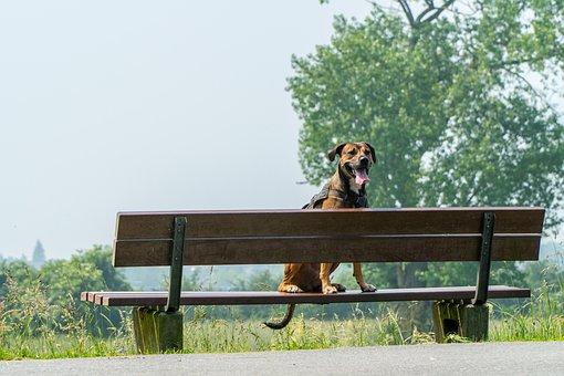 Dog, Bank, Wait, Rest, Bench, Nature, Wood, Animal, Sit