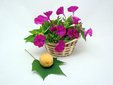 Flowers, Basket, Green, Yellow, Nature, Summer, Bloom
