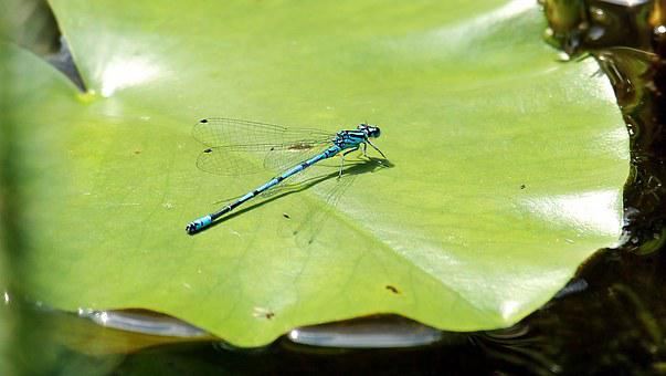 Dragonfly, Blue, Blue Dragonfly, Close, Insect