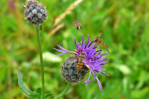 Flowers, Violet, Purple, Fly, Hoverfly