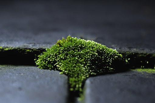 Moss, Green, Moss On The Roof, Micro-world