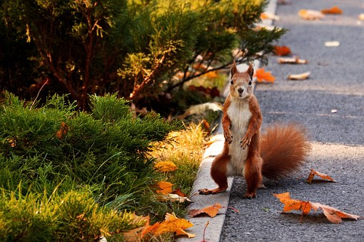 Squirrel, Park, Autumn, Animals, Rodent, In The Park