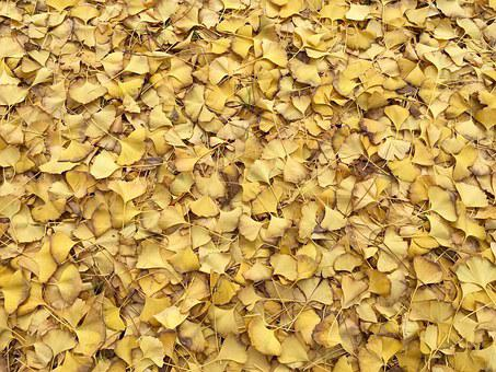 Leaves, Yellow, Fall, Autumn, Texture, Pattern, Floor