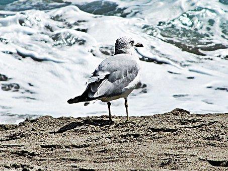 Loan Gull, Frothing Sea, Sand, Precipice, Ocean