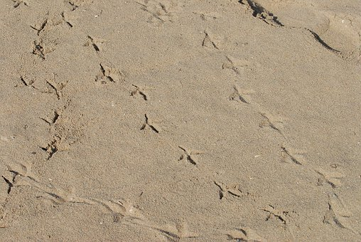 Footmark, Tracks, Bird, Sand, Foot, Trace, Step, Print