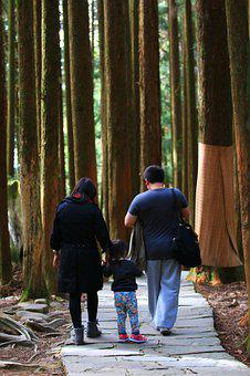 A Person, Forest, Woodland, Walk, People, Falily