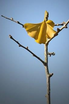 Welkes Sheet, Autumn, Yellow Sheet, Withered