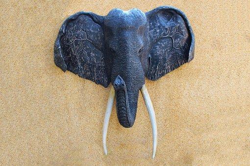 Elephant Head, Wall Plaque, Head, Animal Head, Trophy