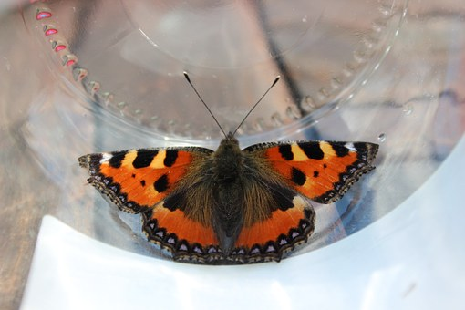 Butterfly, Orange, Black, Nature, Insect, Little Turtle