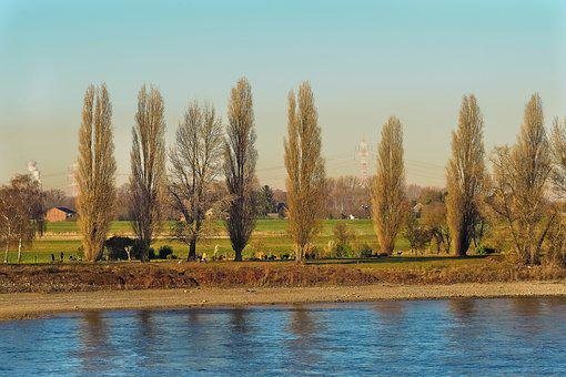 Landscape, Nature, Mood, Sky, Trees, Fence, Graze