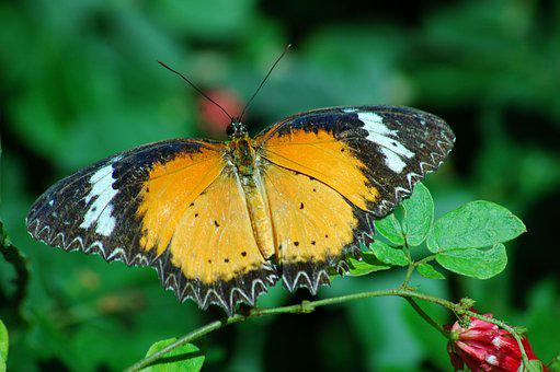 Butterfly, Insect, Colorful, Nature, Summer, Animal