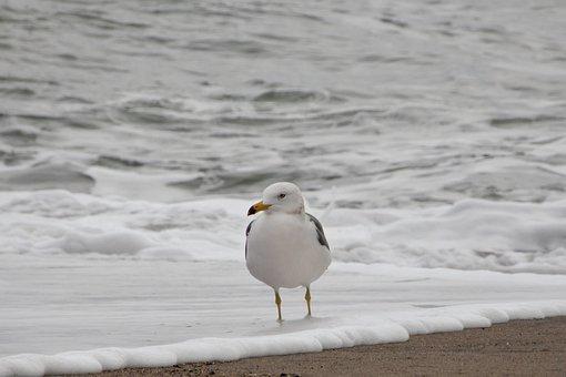 Animal, Sea, Beach, Wave, Foam, Bubble, Seagull