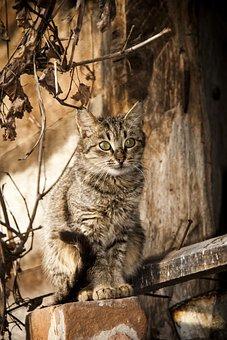 Cat, Animal, Pet, Village, Kitten, On The Roof