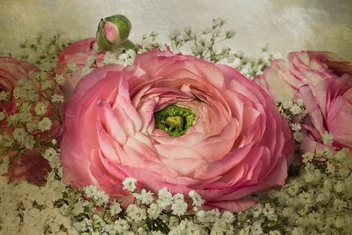 Nature, Flowers, Bouquet, Gypsophila, Romantic