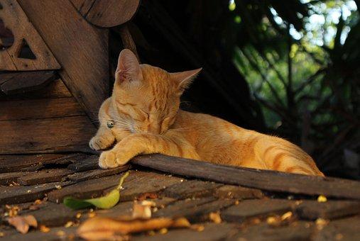 Cat, Feline, Animal, Pet, Cute, Domestic, Sleeping Cat