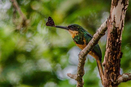 Bird, Beija Flor, Insect-bird, Eat, Beak, Take
