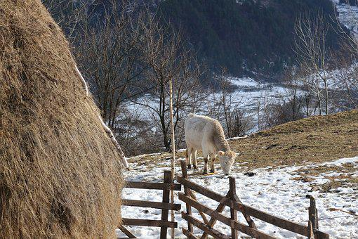 Country, Village, Hills, Hay, Countryside, Rural, House