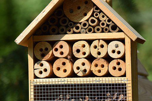 Garden, Insect House, Hotbed, Insect Protection