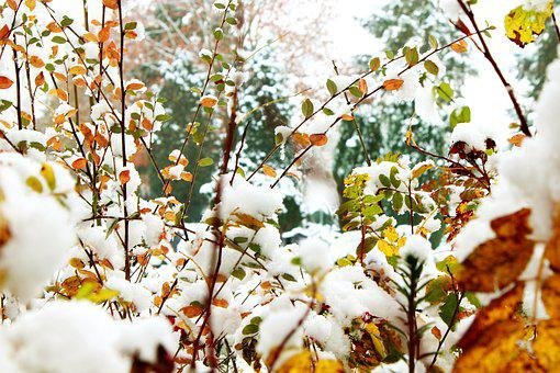 Autumn, Winter, Snow, Golden Autumn, Nature, Landscape