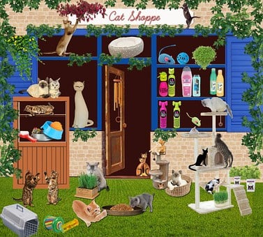 Cat, Pet Store, Cats, Shop, Black Cat, Mounting