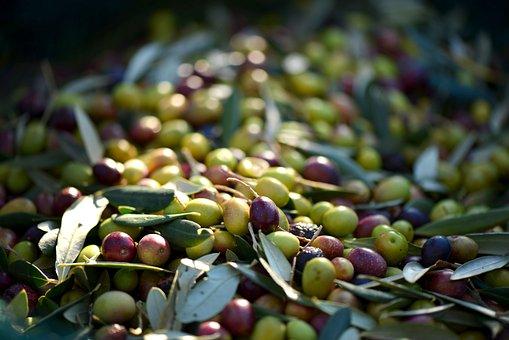 Olives, Provence, France