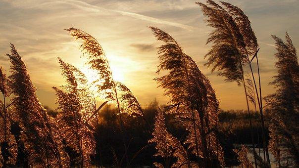 Sunset, Reeds, Light, Landscape, Against Day