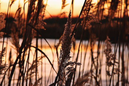 Afterglow, Sunset, Reed, Pond, Winter, Good Weather