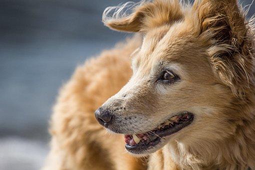 Dog, Face, Nose, Laugh, Hybrid