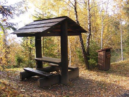 Autumn, Colors, Rest, Caret, Sun, Forest, Trees, Nature