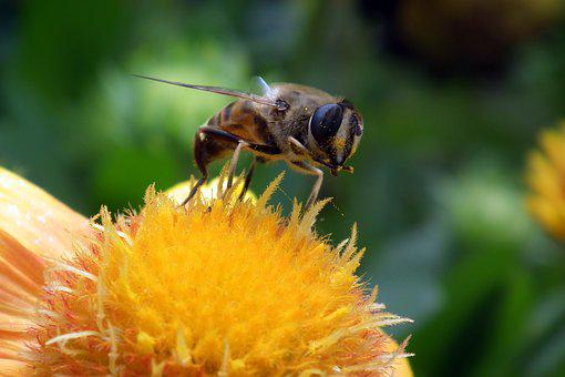 Flowers, Floriade, Nature, Insect, Bee