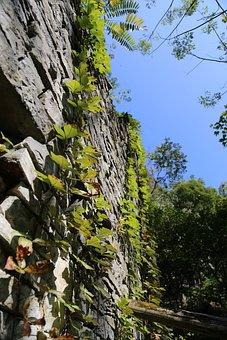 Yangshuo, Stone, Climbing, China, Plant