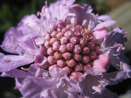 Flower, Dew, Morning, Garden, Light