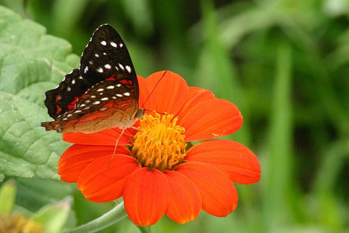 Butterfly, And, Fror, Flowers, Orange