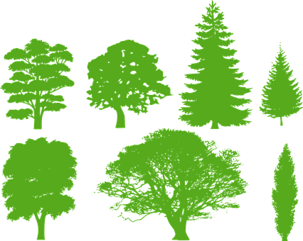 Trees, Silhouette, Variety, Identification, Isolated