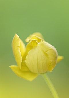 Yellow Flower, Flower, S, Yellow, Spring, Plant, Nature