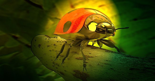 Ladybug, Beetle, Lucky Charm, Nature, Insect, 3d Model
