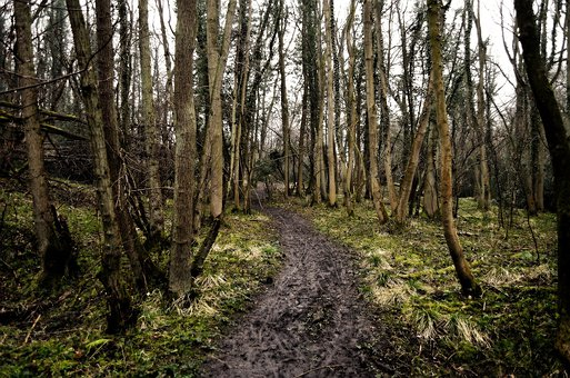 Tree, Trees, Tribe, Tribes, Forest, Path, Nature