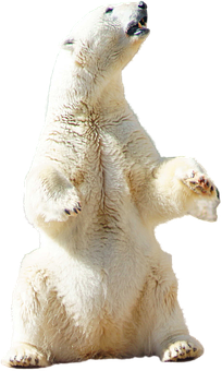 Polar, Bear, Polar Bear, Animal, Nature, Arctic, Snow