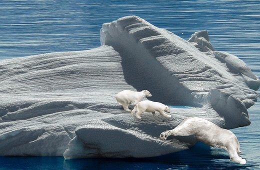 Polar Bears, Iceberg, Predator, Polar Bear Cub, Arctic