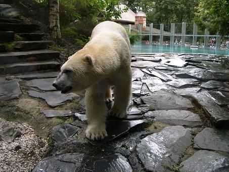 Bear, Zoo, Arrow There, Polar Bear