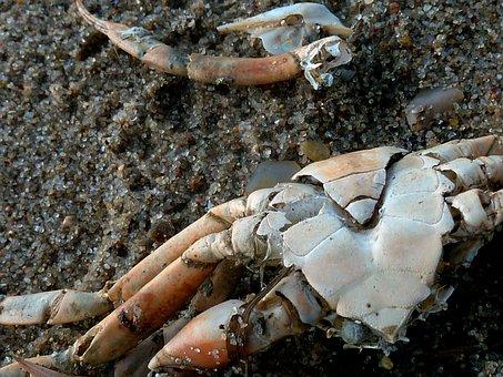 Cancer Panzer, Cancer, Shellfish, Pliers, Crab