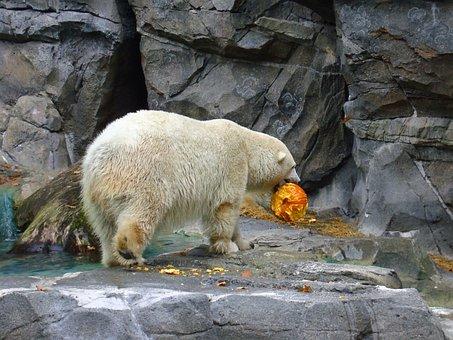Polar Bear, Zoo, Animal, Wildlife, Carnivore