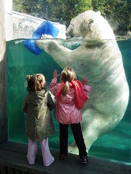 Polar Bear, Large, White, Children, Comparison