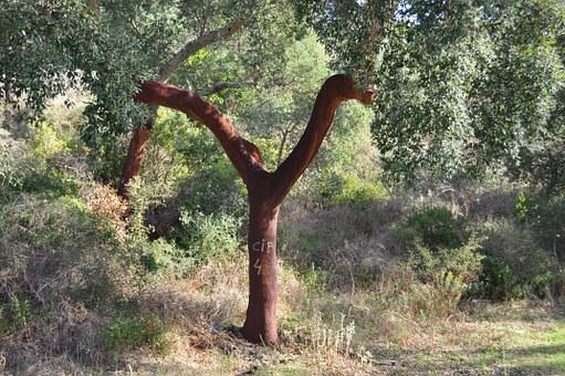 Tree, Cork, Bark, Layer, Cork Oak, Nature