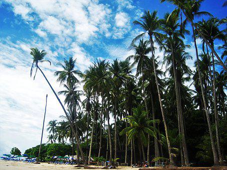 Costa Rica, Pacific Beach, High Palm Trees, Exotic