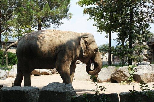 Elephant, Animal, Animals, Animal World, Zoo, Nature
