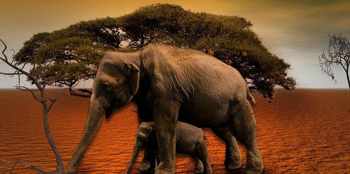 Elephant, Africa, Baobab, Tree, National Park, Savannah