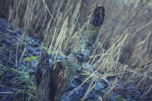 Forest, Tree, Nature, Landscape, Pine Cones, Mood