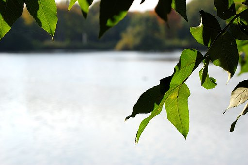 Lake, Water, Tree, Leaves, Gelsenkirchen, Berger Lake
