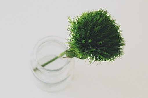 Sweet William, Green Beard Carnation, Glass, Bottle